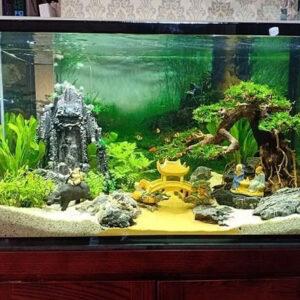 kính bể cá hải phòng